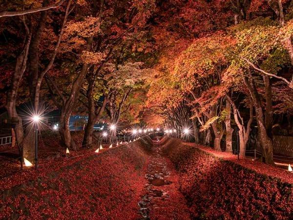 【新宿発】河口湖紅葉まつりライトアップ&秋の味覚「松茸膳」イメージ