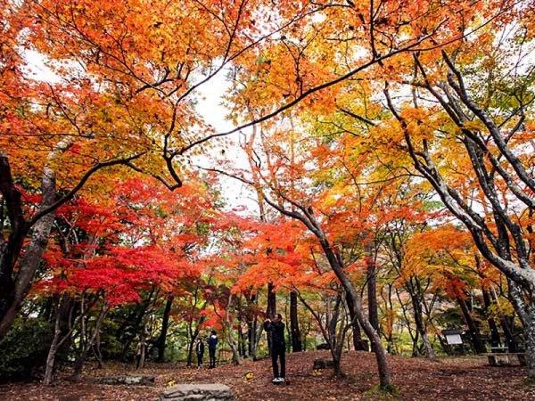 ≪GoToトラベル対象商品≫【東京発】秋の絶景を堪能!長瀞紅葉まつり&長瀞ライン下り◎ダイナミックな川下りを楽しんだ後は絶景の紅葉観賞。ランチバイキングの昼食付。