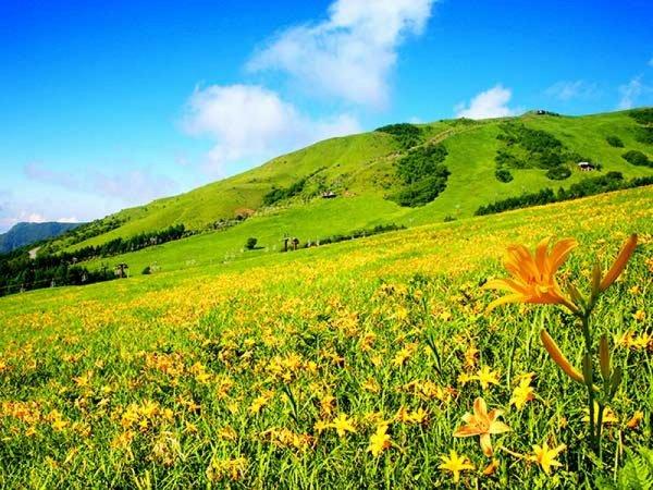 【新宿発】大パノラマの「車山スカイテラス」&黄色の絨毯「ニッコウキスゲ」観賞◎天空のリゾート車山高原でリフレッシュ。黄色いお花の絨毯と山頂のスカイテラスの絶景は最高のSNS映え♪信州の味覚を味わう昼食&リフト利用料込み