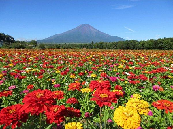 季節の花観賞のバスツアーイメージ
