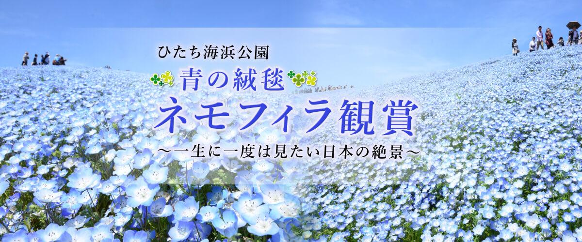 ひたち海浜公園 青の絨毯 ネモフィラ鑑賞 一生に一度は見たい日本の絶景