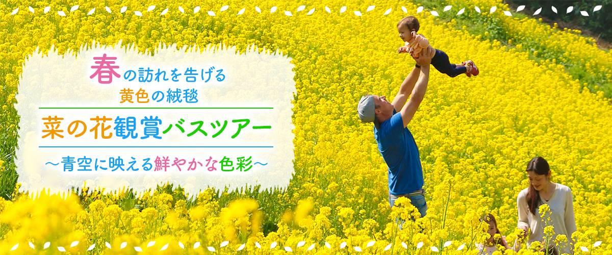 春の訪れを告げる黄色の絨毯。菜の花観賞バスツアー