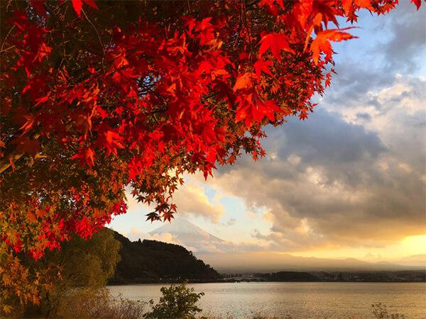 夕方の河口湖バックの紅葉
