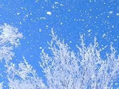 関東夜発バス日帰りツアーへのリンクボタン