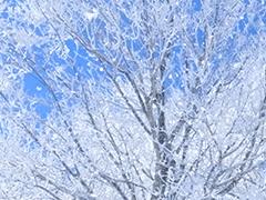 夜発バス+宿