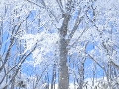 関東夜発スキーバスへのリンクボタン