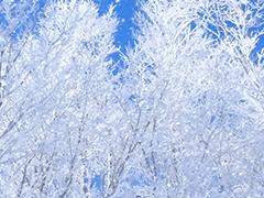 JR新幹線宿泊